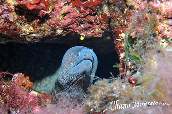 Morena en las islas Bledes (Foto: Chano Montelongo)